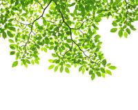 Green leave Stock Image