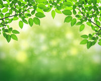 Green leave Royalty Free Stock Photos