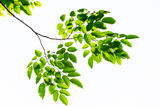 Green leave Royalty Free Stock Photo