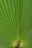 Green leave Stock Photo