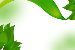 Green leave abstract background Stock Photo