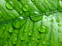 Green Leave After With Fresh Water Drops Macro Stock Photos