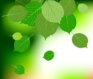 Green leave background Royalty Free Stock Images