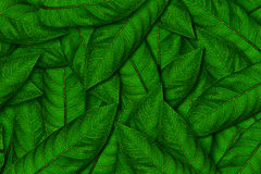 Green leave background. Green fresh leave pile up background Stock Image