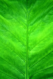 Green leave background Stock Image