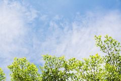 Green leave with blue sky. Background stock photo