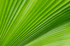 Green leave. Close up of green leave Stock Photos