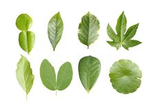 Green leave collection Royalty Free Stock Photo