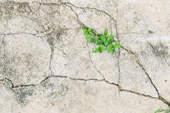 Green leave. In dried cracked mud Stock Photo