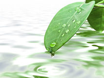 Green leave with drops royalty free stock photo