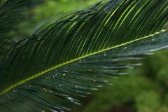 Green leave in the forest tropical stock photo