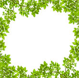 Green leave frame Royalty Free Stock Image