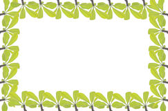 Green leave frame and border Stock Image