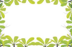 Green leave frame and border Stock Photo