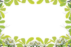 Green leave frame and border Royalty Free Stock Photography