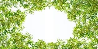 Green leave frame. Clipping path Stock Photo