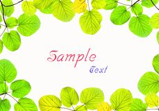 Green leave frame isolated on white background Royalty Free Stock Photos