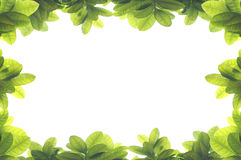 Green leave frame. On white background Royalty Free Stock Photo