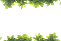 Green leave frame Royalty Free Stock Photos