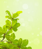 Green leave on green background Royalty Free Stock Photo