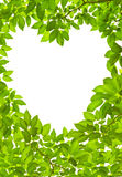 Green leave heart shape Stock Photography