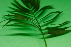 Green leave. Isolated on the green background. Texture of a tropical plant. A piece of nature concept royalty free stock photos