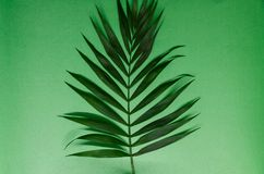 Green leave. Isolated on the green background. Texture of a tropical plant. A piece of nature concept royalty free stock photo