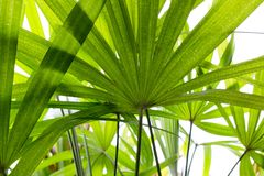 Green leave, leaft background texture Stock Photos