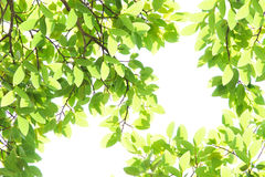 Green leave. S is a beautiful background royalty free stock photo