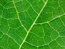 Green leave natural background Royalty Free Stock Photography