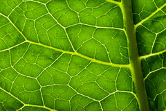 Green leave texture Royalty Free Stock Photos