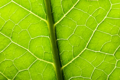 Green leave texture Stock Photos