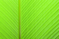 Green leave texture Stock Image