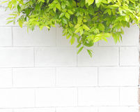 Green leave on wall Royalty Free Stock Photography