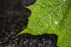 Green leave and water droplets. Detail of green leave covered by water dreplets after a storm royalty free stock photography