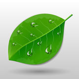 Green leave with water drops Stock Photo