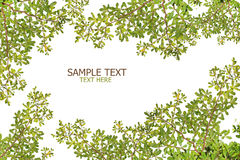 Green leave on white background create to frame Royalty Free Stock Image