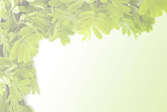 Green leave on white background Royalty Free Stock Image