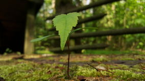 Green leave, young tree Royalty Free Stock Images