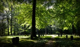 Green Leaved Tall Trees Under Sunny Sky Stock Images