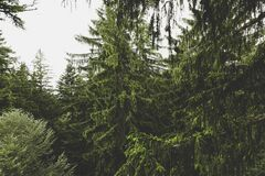 Green Leaved Trees during Daytime Royalty Free Stock Photo