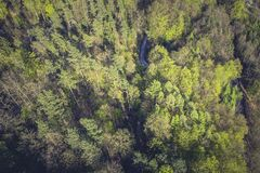 Green Leaved Trees during Daytime Royalty Free Stock Photos
