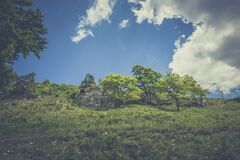 Green Leaved Trees on Hillside during Daytime Royalty Free Stock Image