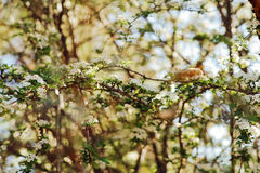 Green Leaved Trees Under Sunny Sky Stock Photography
