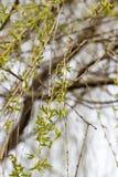 green leaves royaltyfria bilder
