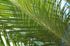 green leaves arkivbilder