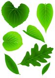 Green Leaves. Vector illustration of several types of leaves Stock Photo