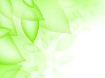 Green leaves. Vitality frame with copyspace, EPS10 Stock Images
