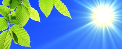 Green leaves. And blue sky with sun and copyspace Stock Photos