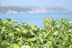 Green leaves. And blured sea view behind Stock Images